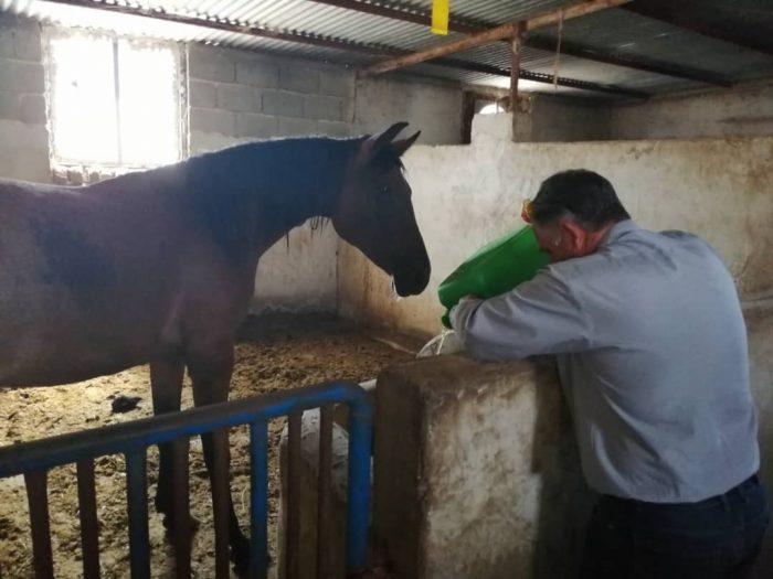 افزودن EM به آب آشامیدنی اسب