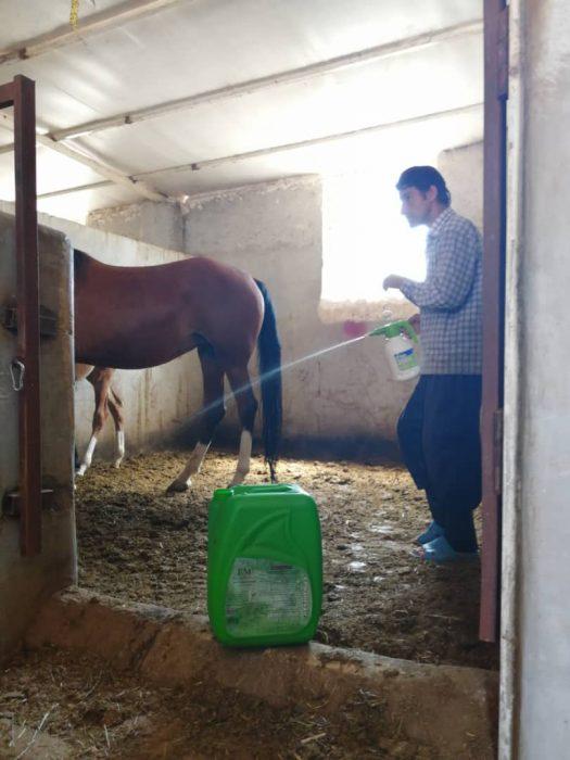 محلول پاشی ای ام در فضای نگهداری اسب