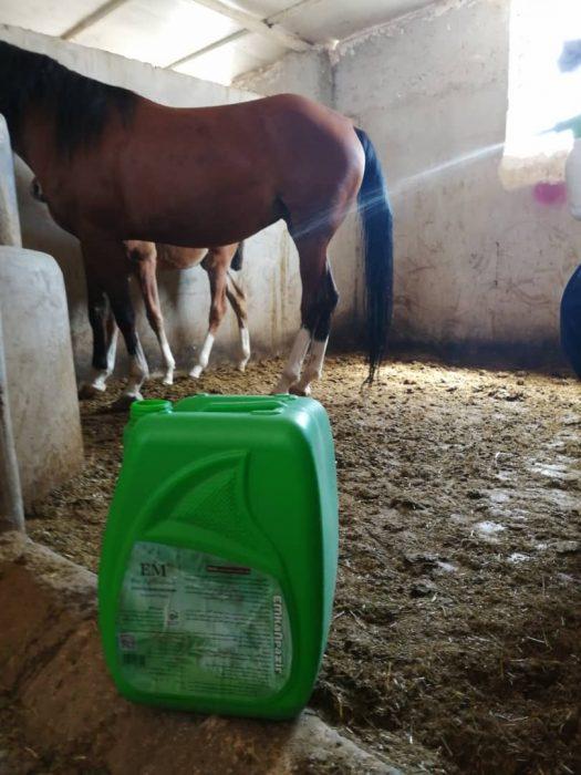 EM Horse husbandry