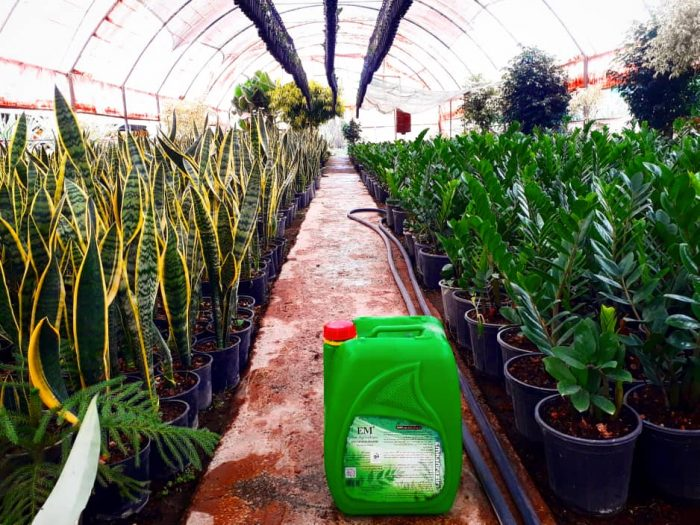 مصرف ای ام رشد بی نظیر، طراوت و سرسبزی گل ها و گیاهان را به همراه می آورد.