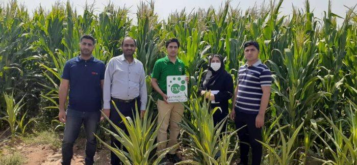 محصولات شرکت امکان پذیر پارس برای کشت ذرت و رضایت کشاورزان