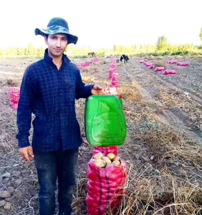 نتایج چشمگیر مصرف ای ام و دیگر محصولات شرکت امکان پذیر پارس در کشت سیب زمینی با سپاس از دوست  ما جناب آقای اسعدی از آذربایجان شرقی