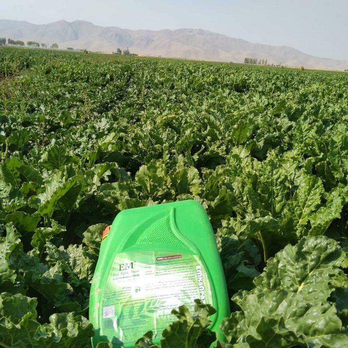 شادابی و سبزینگی گیاهان با مصرف ای ام و دیگر محصولات شرکت