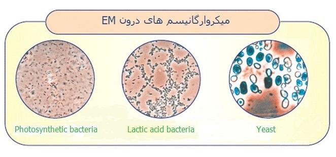 em-effective-microorganisms